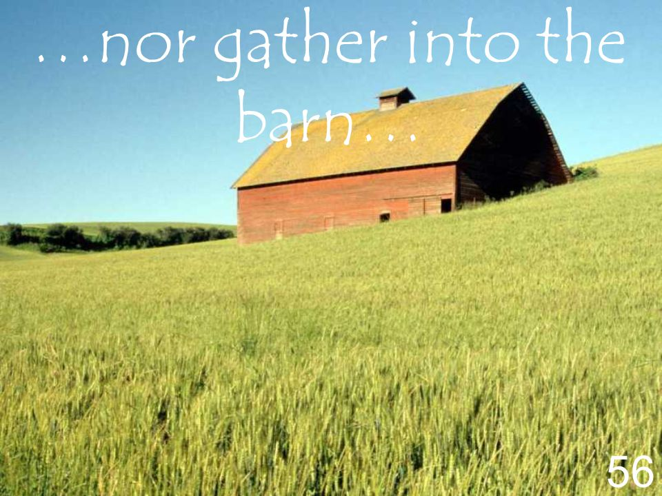 …nor gather into the barn… 56