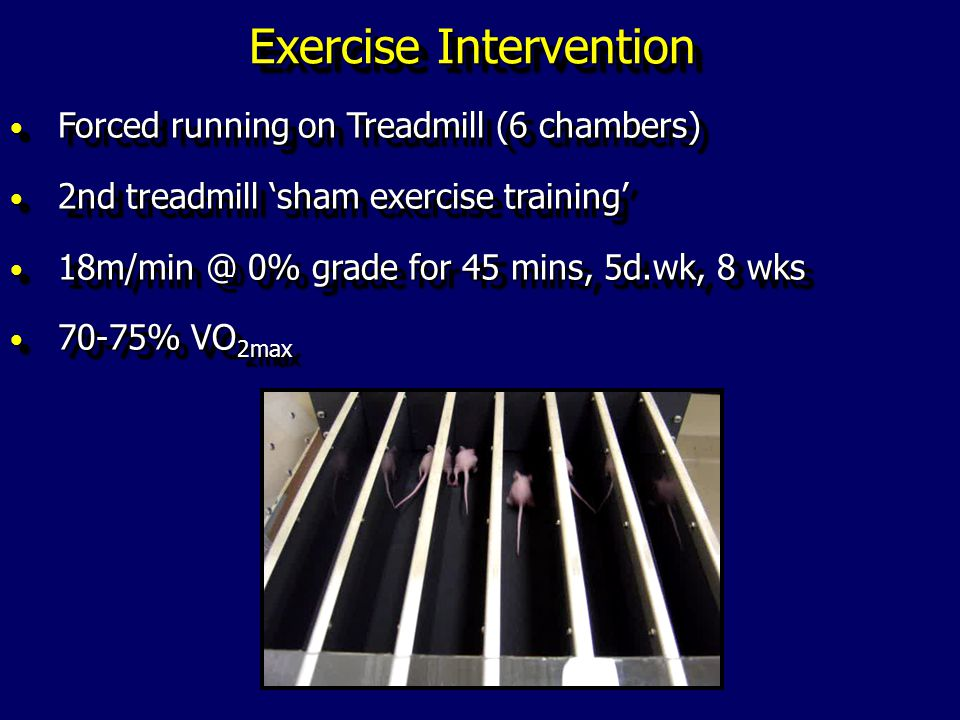 Exercise Intervention Forced running on Treadmill (6 chambers) Forced running on Treadmill (6 chambers) 2nd treadmill sham exercise training 2nd treadmill sham exercise training 18m/min @ 0% grade for 45 mins, 5d.wk, 8 wks 18m/min @ 0% grade for 45 mins, 5d.wk, 8 wks 70-75% VO 2max 70-75% VO 2max Forced running on Treadmill (6 chambers) Forced running on Treadmill (6 chambers) 2nd treadmill sham exercise training 2nd treadmill sham exercise training 18m/min @ 0% grade for 45 mins, 5d.wk, 8 wks 18m/min @ 0% grade for 45 mins, 5d.wk, 8 wks 70-75% VO 2max 70-75% VO 2max