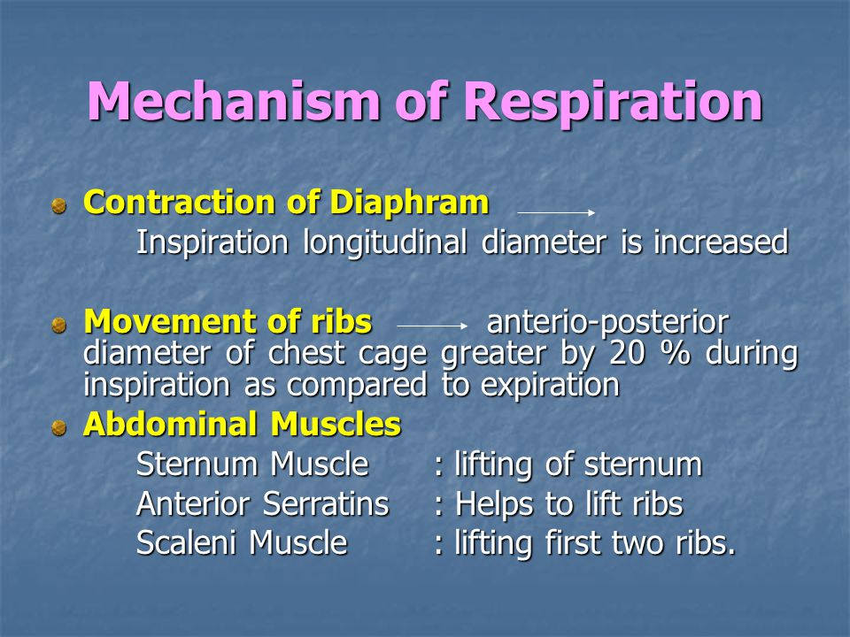 Mechanism of Respiration Contraction of Diaphram Inspiration longitudinal diameter is increased Movement of ribs anterio-posterior diameter of chest cage greater by 20 % during inspiration as compared to expiration Abdominal Muscles Sternum Muscle : lifting of sternum Anterior Serratins : Helps to lift ribs Scaleni Muscle : lifting first two ribs.