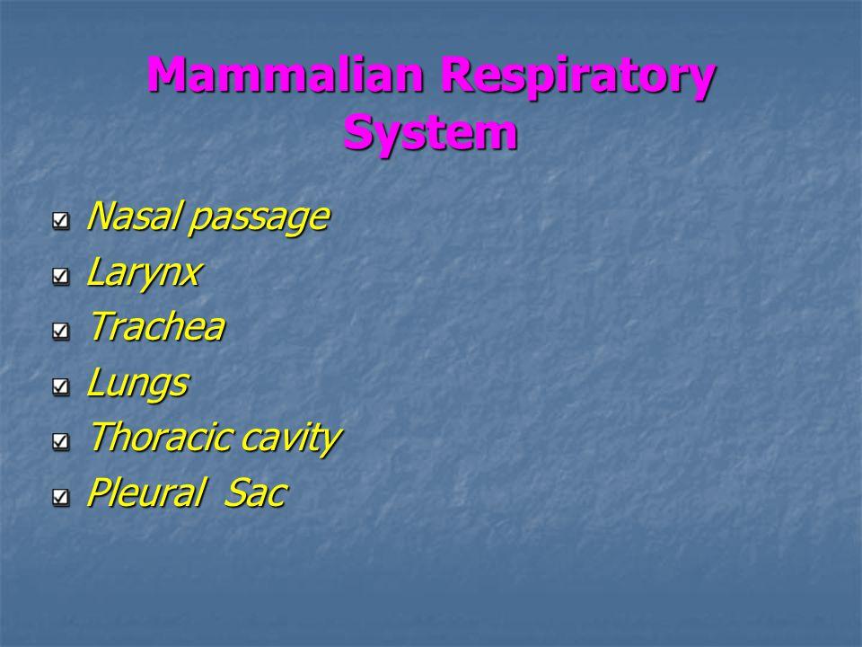 Mammalian Respiratory System Nasal passage LarynxTracheaLungs Thoracic cavity Pleural Sac