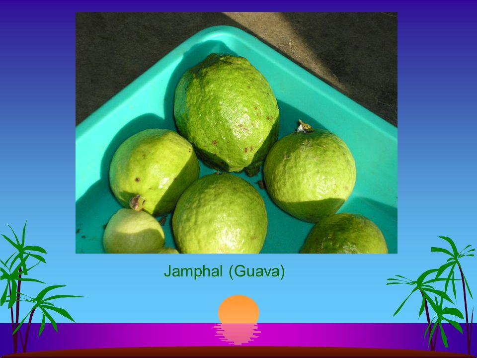 Dadam (Pomegranate)