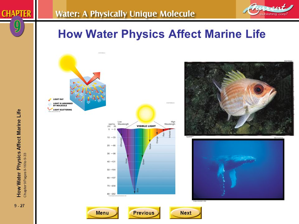 MenuPreviousNext 9 - 27 How Water Physics Affect Marine Life Chapter 9 Pages 9-16 to 9-33