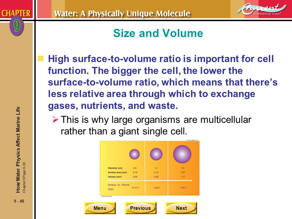 MenuPreviousNext 9 - 48 Size and Volume nHigh surface-to-volume ratio is important for cell function. The bigger the cell, the lower the surface-to-vo