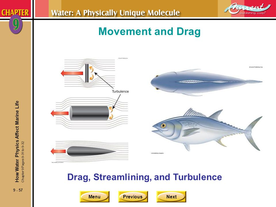 MenuPreviousNext 9 - 57 Movement and Drag Drag, Streamlining, and Turbulence How Water Physics Affect Marine Life Chapter 9 Pages 9-31 to 9-32