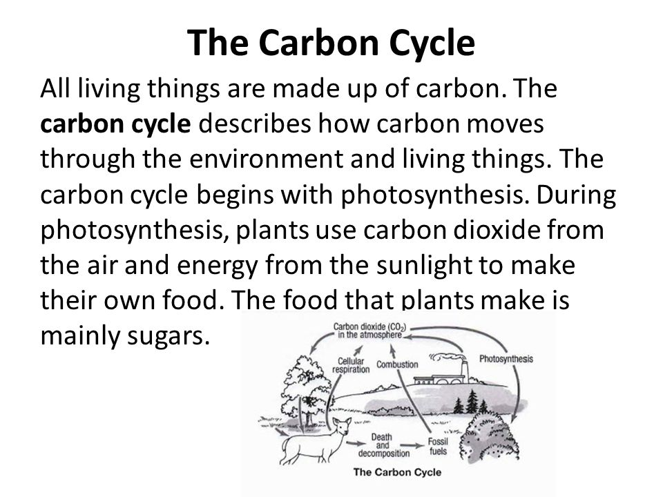 The Carbon Cycle All living things are made up of carbon. The carbon cycle describes how carbon moves through the environment and living things. The c