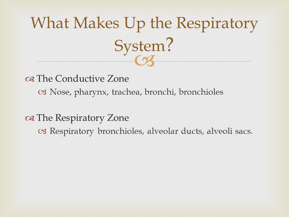 The Conductive Zone Nose, pharynx, trachea, bronchi, bronchioles The Respiratory Zone Respiratory bronchioles, alveolar ducts, alveoli sacs. What Make