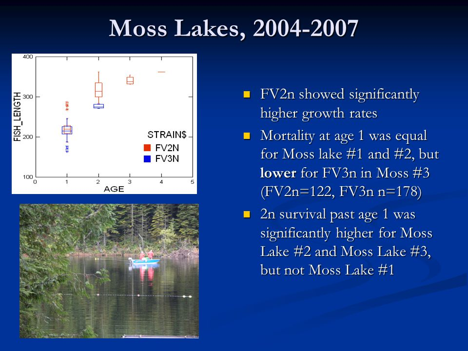 Moss Lakes, 2004-2007 FV2n showed significantly higher growth rates Mortality at age 1 was equal for Moss lake #1 and #2, but lower for FV3n in Moss #