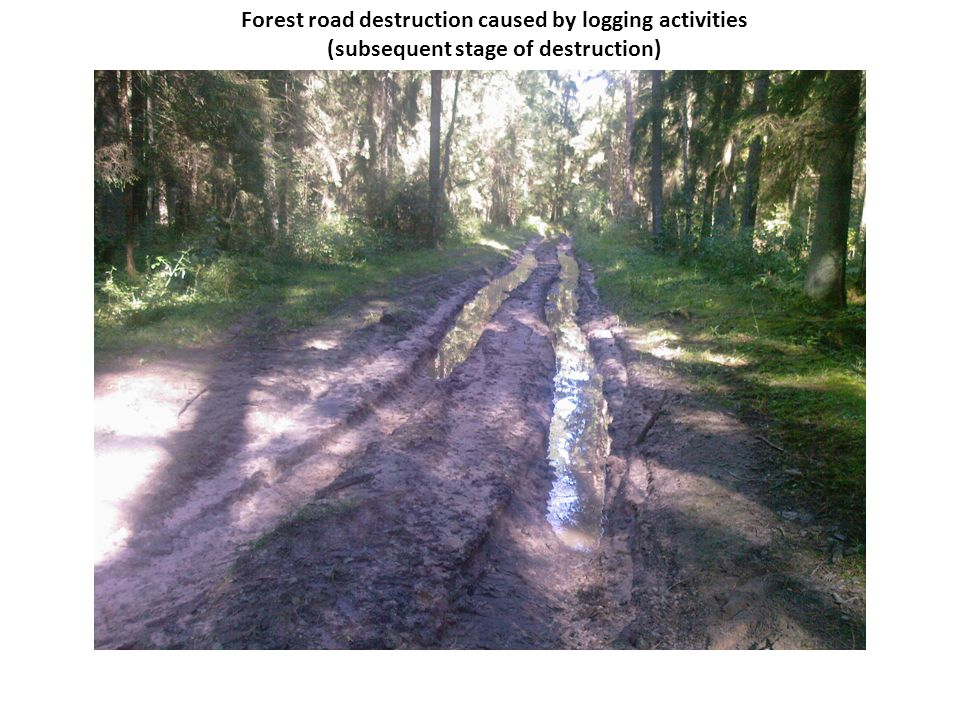 Forest road destruction caused by logging activities (subsequent stage of destruction)