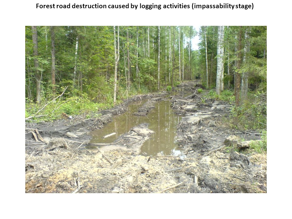 Forest road destruction caused by logging activities (impassability stage)