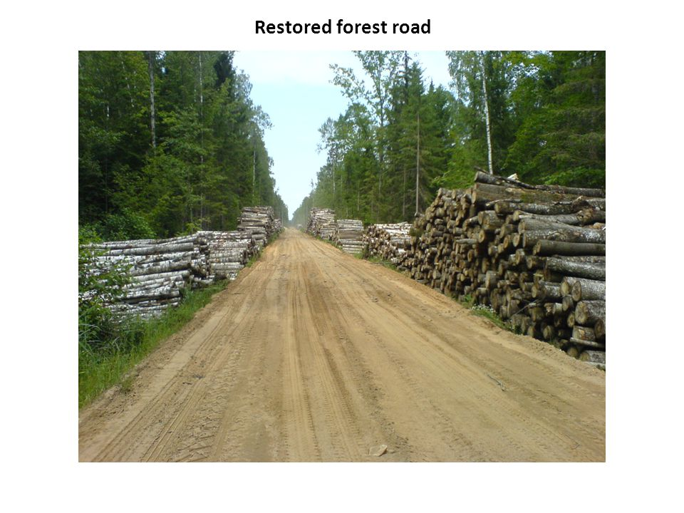 Restored forest road