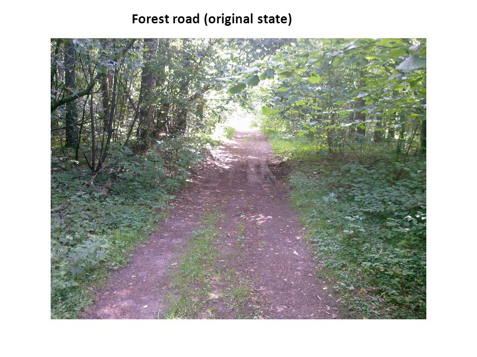 Forest road (original state)