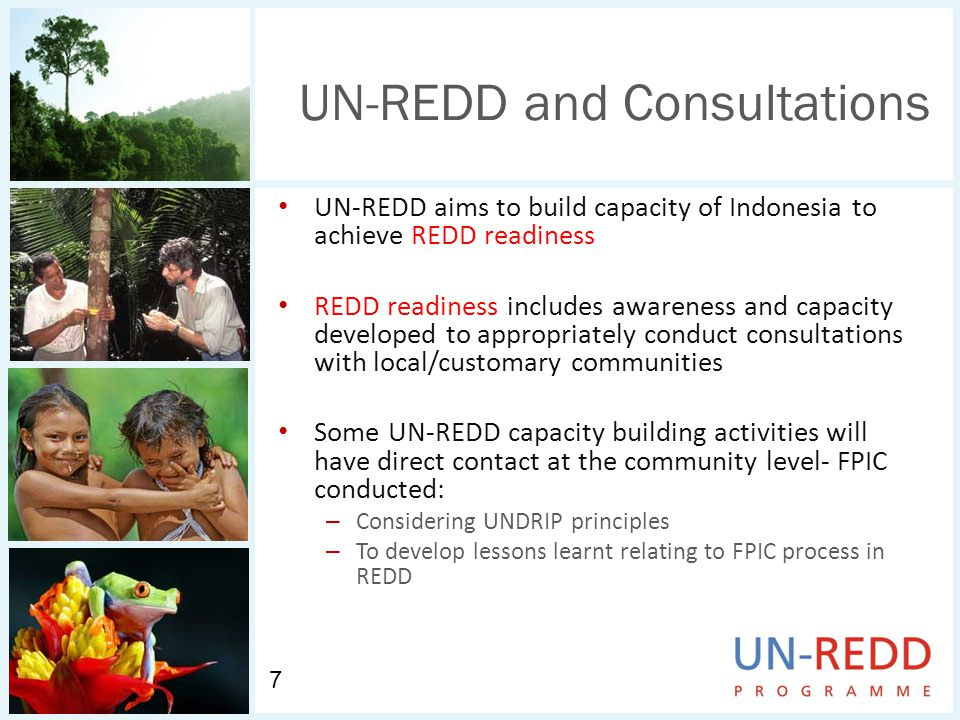 UN-REDD and Consultations UN-REDD aims to build capacity of Indonesia to achieve REDD readiness REDD readiness includes awareness and capacity developed to appropriately conduct consultations with local/customary communities Some UN-REDD capacity building activities will have direct contact at the community level- FPIC conducted: – Considering UNDRIP principles – To develop lessons learnt relating to FPIC process in REDD 7