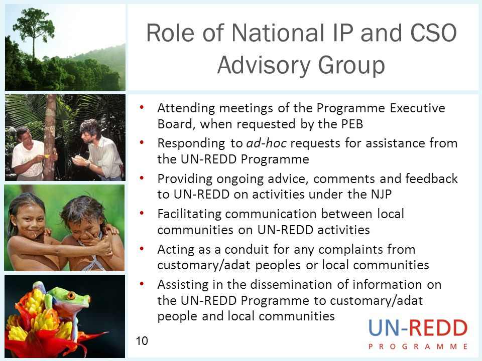 Role of National IP and CSO Advisory Group Attending meetings of the Programme Executive Board, when requested by the PEB Responding to ad-hoc requests for assistance from the UN-REDD Programme Providing ongoing advice, comments and feedback to UN-REDD on activities under the NJP Facilitating communication between local communities on UN-REDD activities Acting as a conduit for any complaints from customary/adat peoples or local communities Assisting in the dissemination of information on the UN-REDD Programme to customary/adat people and local communities 10