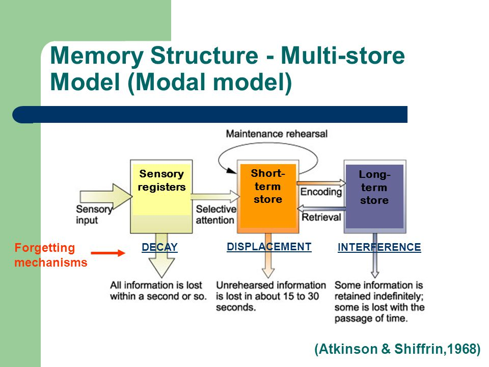 Memory Structure - Multi-store Model (Modal model) DECAY DISPLACEMENT INTERFERENCE Forgetting mechanisms Short- term store Long- term store Sensory registers (Atkinson & Shiffrin,1968)