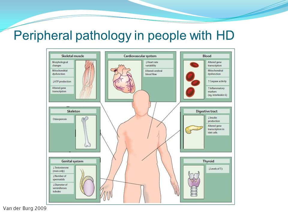 Peripheral pathology in people with HD Van der Burg 2009