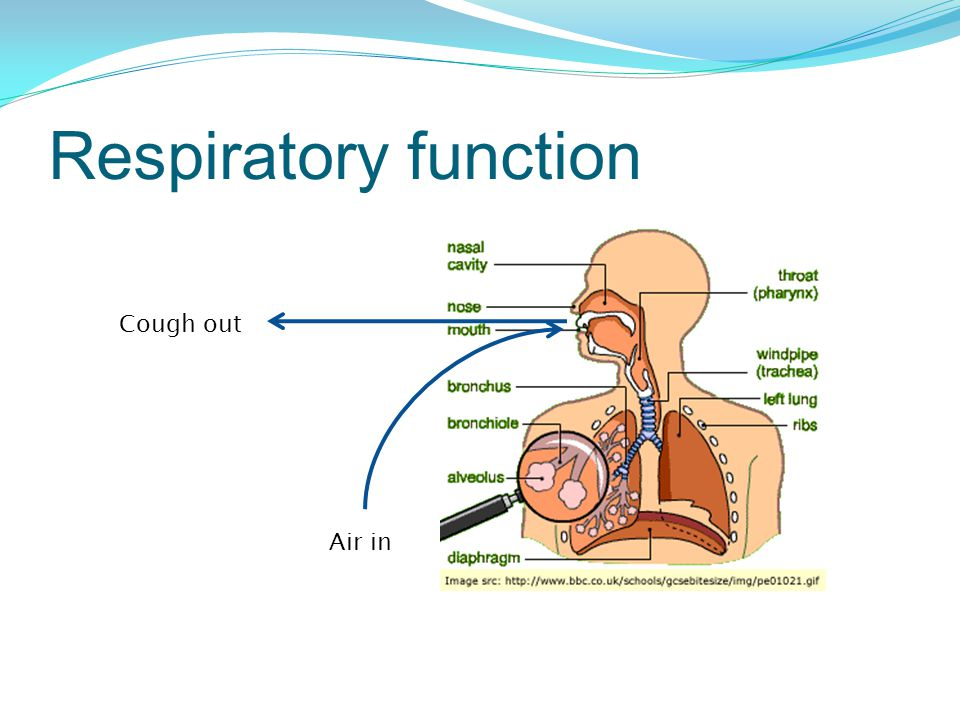 Respiratory function Air in Cough out