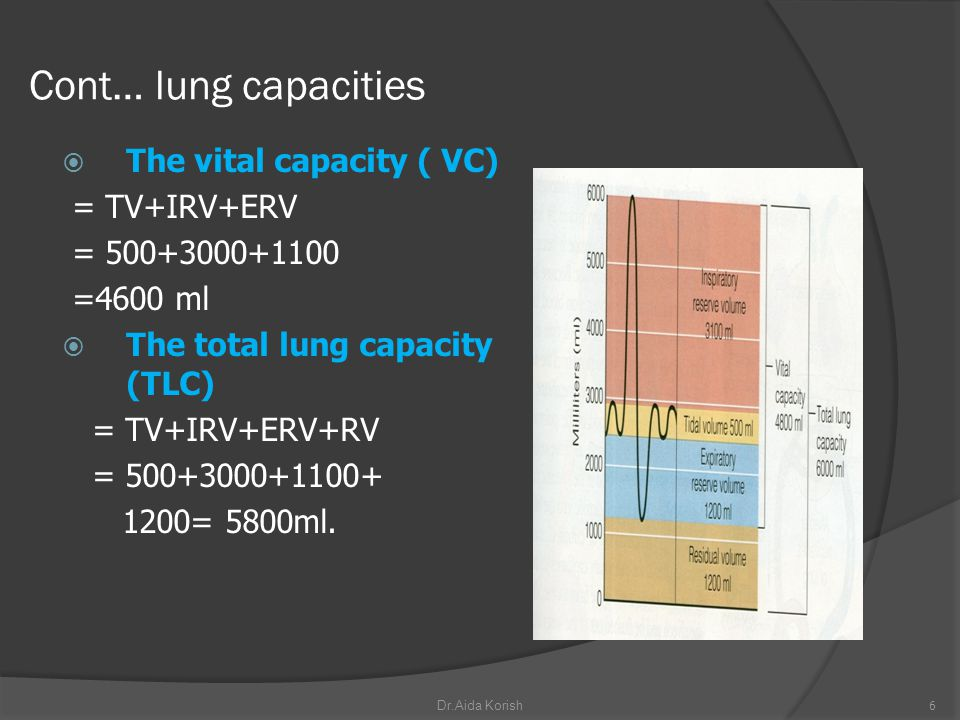 Cont… lung capacities The vital capacity ( VC) = TV+IRV+ERV = 500+3000+1100 =4600 ml The total lung capacity (TLC) = TV+IRV+ERV+RV = 500+3000+1100+ 12