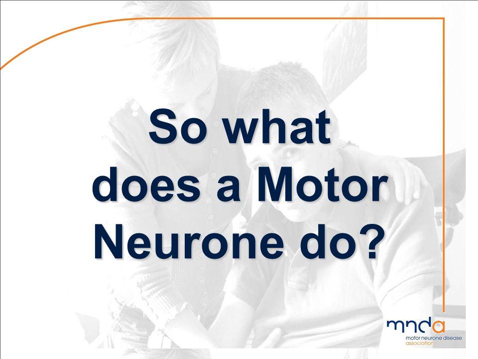 Function of Motor Neurones
