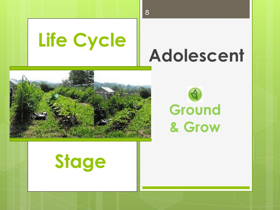 Life Cycle Adolescent 8 Ground & Grow Stage