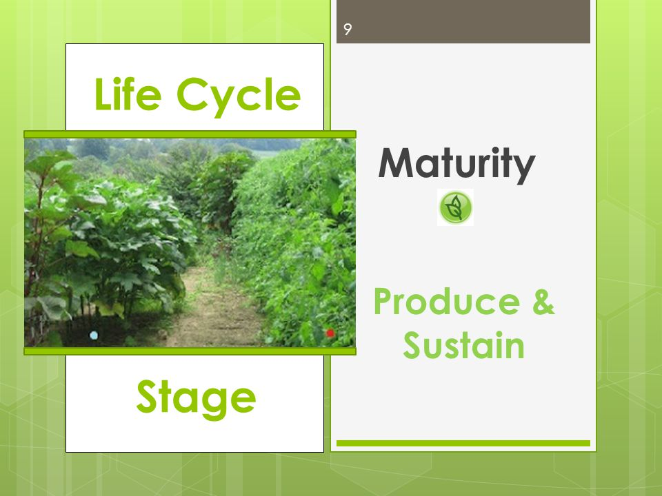 Life Cycle Maturity 9 Produce & Sustain Stage