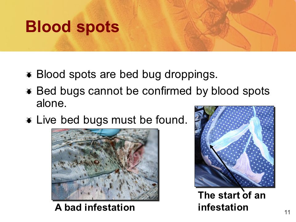 11 The start of an infestation A bad infestation Blood spots Blood spots are bed bug droppings.