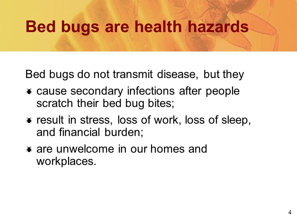 4 Bed bugs are health hazards Bed bugs do not transmit disease, but they cause secondary infections after people scratch their bed bug bites; result in stress, loss of work, loss of sleep, and financial burden; are unwelcome in our homes and workplaces.