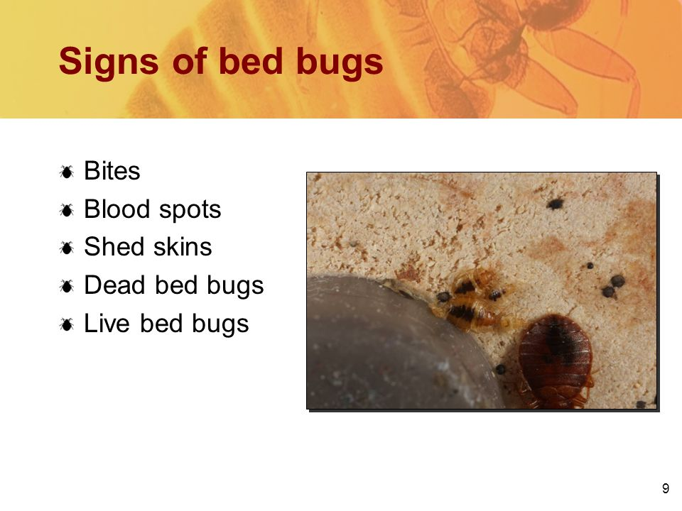 9 Signs of bed bugs Bites Blood spots Shed skins Dead bed bugs Live bed bugs