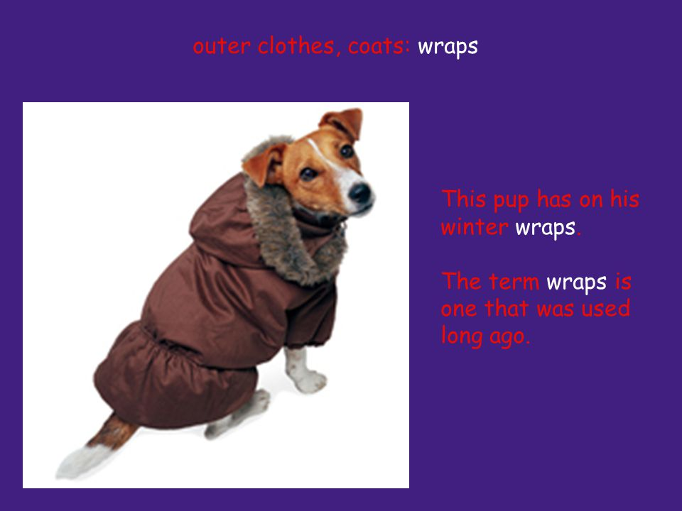 This pup has on his winter wraps. The term wraps is one that was used long ago.