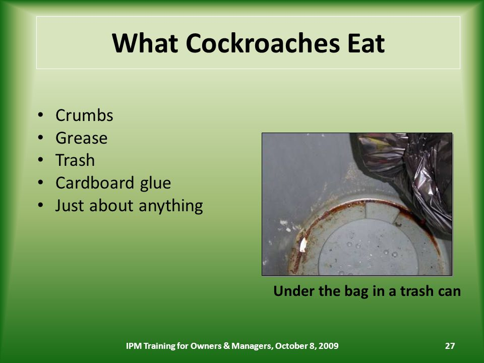 27 What Cockroaches Eat Crumbs Grease Trash Cardboard glue Just about anything Under the bag in a trash can IPM Training for Owners & Managers, October 8, 2009