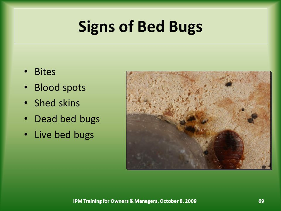 69 Signs of Bed Bugs Bites Blood spots Shed skins Dead bed bugs Live bed bugs IPM Training for Owners & Managers, October 8, 2009