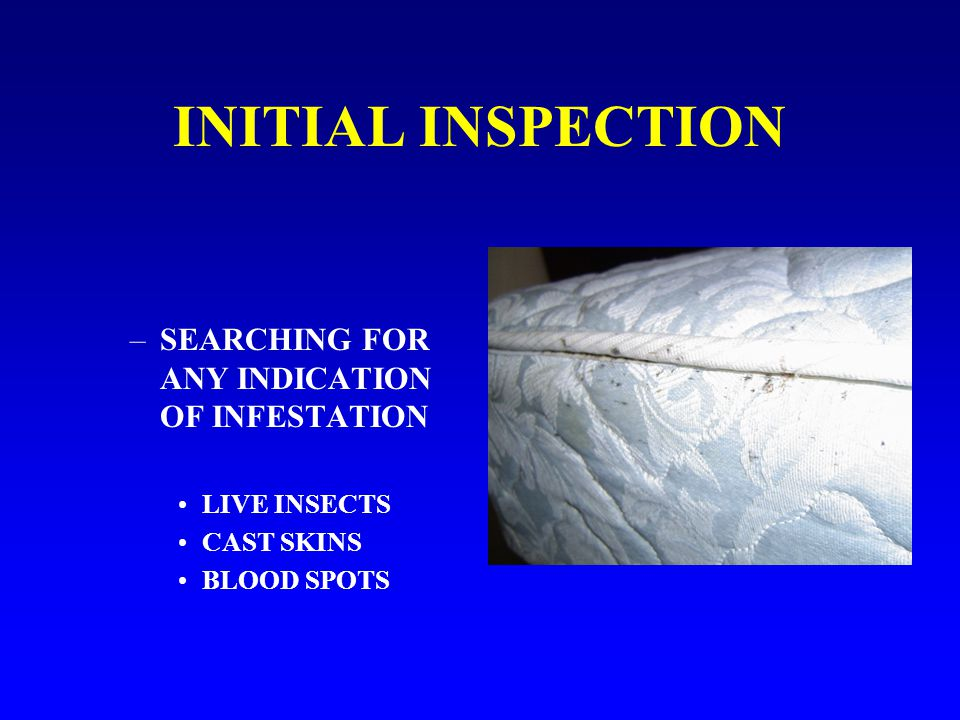 INITIAL INSPECTION –SEARCHING FOR ANY INDICATION OF INFESTATION LIVE INSECTS CAST SKINS BLOOD SPOTS