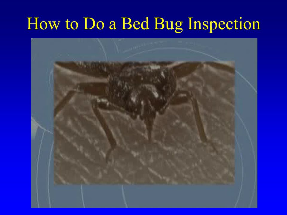 How to Do a Bed Bug Inspection