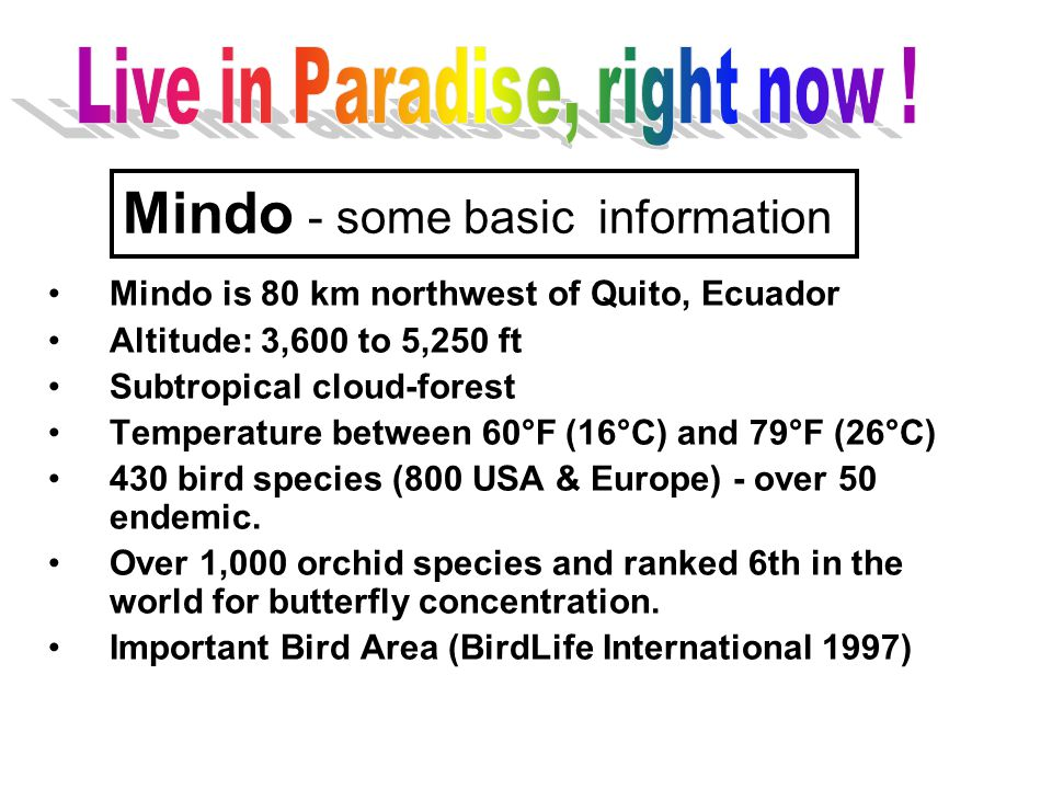 Mindo is 80 km northwest of Quito, Ecuador Altitude: 3,600 to 5,250 ft Subtropical cloud-forest Temperature between 60°F (16°C) and 79°F (26°C) 430 bi