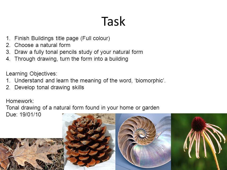 Task 1.Finish Buildings title page (Full colour) 2.Choose a natural form 3.Draw a fully tonal pencils study of your natural form 4.Through drawing, turn the form into a building Learning Objectives: 1.Understand and learn the meaning of the word, biomorphic.