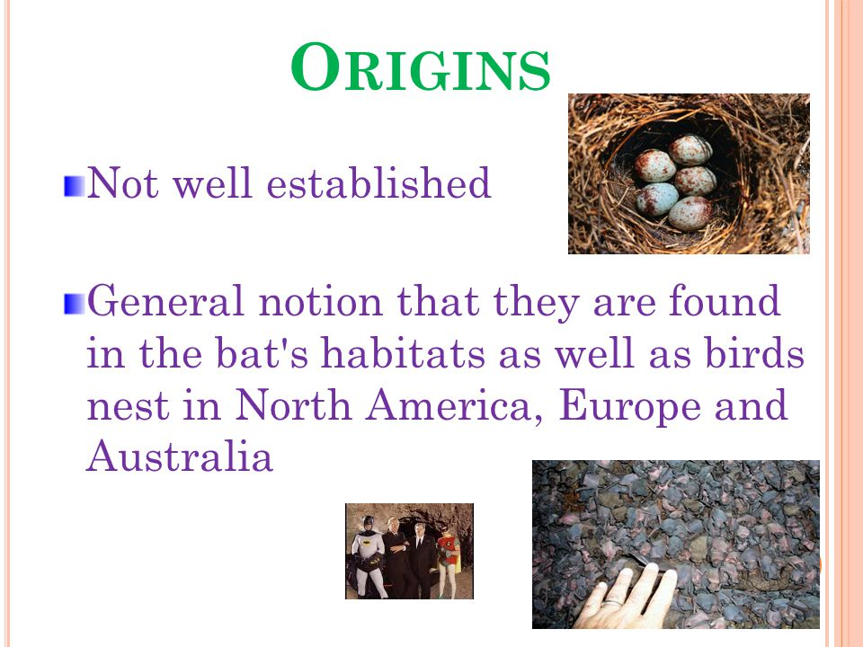O RIGINS Not well established General notion that they are found in the bat s habitats as well as birds nest in North America, Europe and Australia