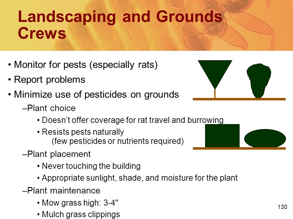 130 Landscaping and Grounds Crews Monitor for pests (especially rats) Report problems Minimize use of pesticides on grounds –Plant choice Doesnt offer