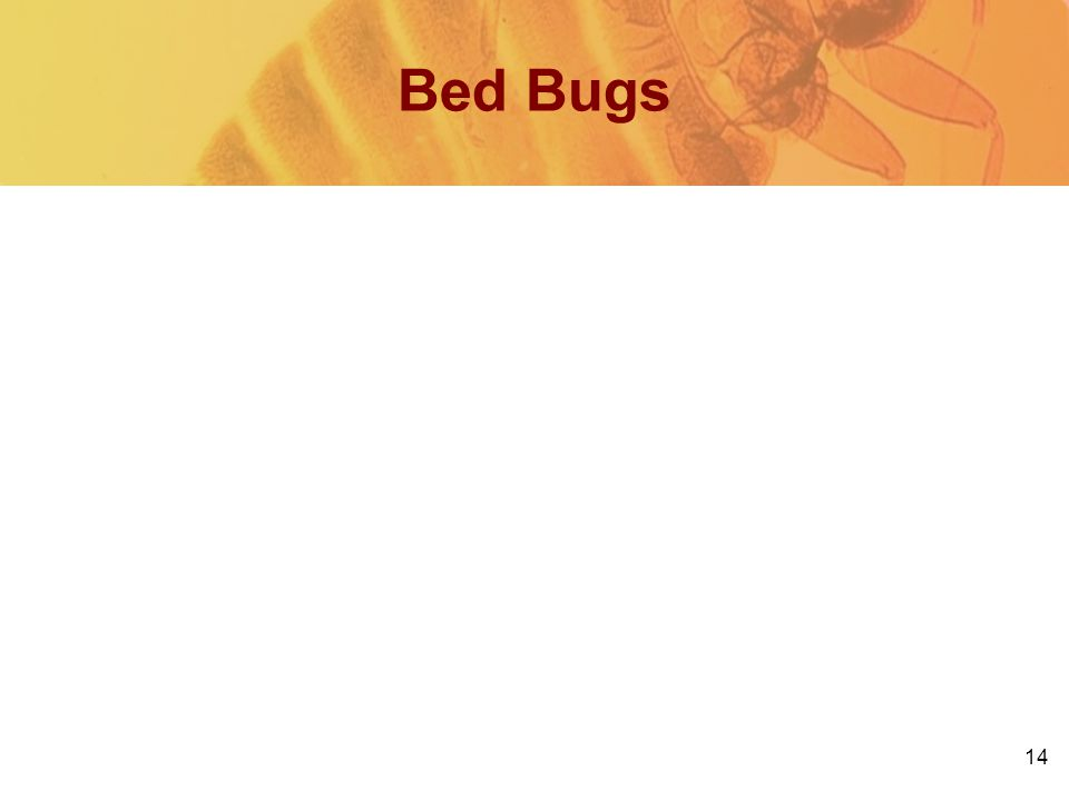 14 Bed Bugs