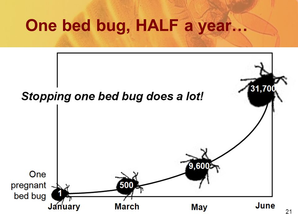 One bed bug, HALF a year… 21