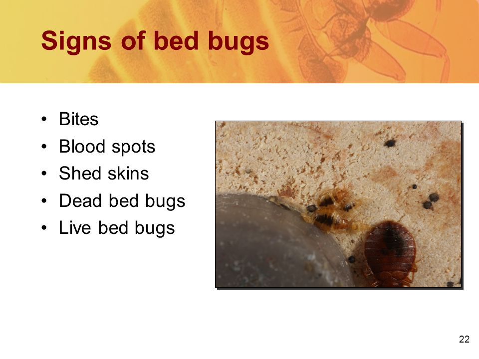22 Signs of bed bugs Bites Blood spots Shed skins Dead bed bugs Live bed bugs
