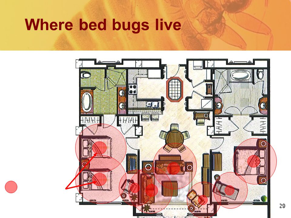 29 Where bed bugs live = Hot Spot Beds, sofas, bedside tables, recliners, picture frames…