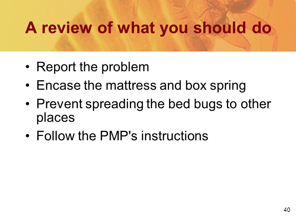 40 A review of what you should do Report the problem Encase the mattress and box spring Prevent spreading the bed bugs to other places Follow the PMP'