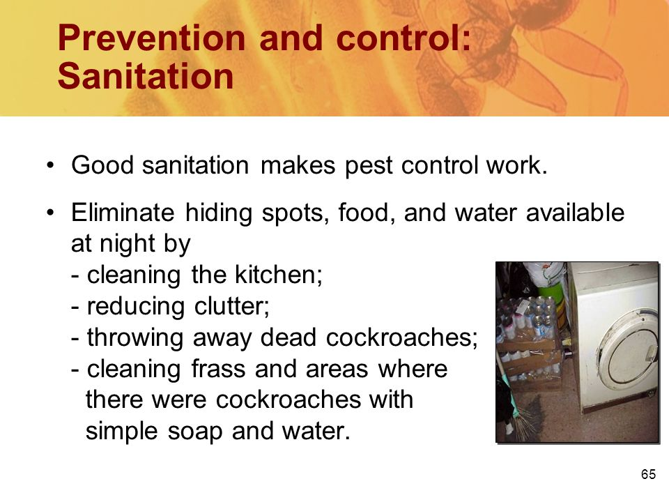 65 Prevention and control: Sanitation Good sanitation makes pest control work. Eliminate hiding spots, food, and water available at night by - cleanin
