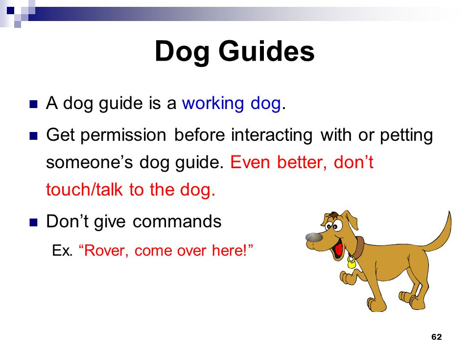 62 Dog Guides A dog guide is a working dog. Get permission before interacting with or petting someones dog guide. Even better, dont touch/talk to the
