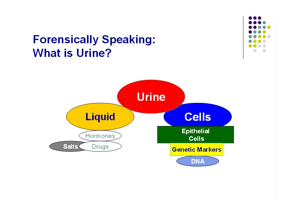 Finding Urine Evidence Finding Logic Odor Presumptive tests Urea testing = only presumptive test – not used often ALS (weak yellow fluorescence of dried stains Confirmatory testing RSID – Immunochromatographic card