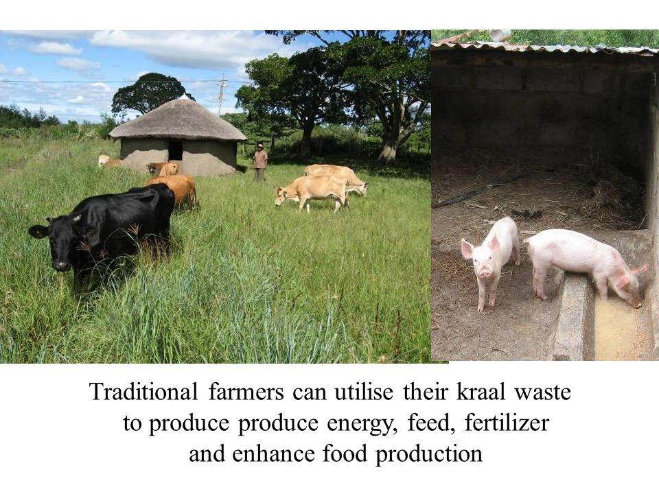 Traditional farmers can utilise their kraal waste to produce produce energy, feed, fertilizer and enhance food production
