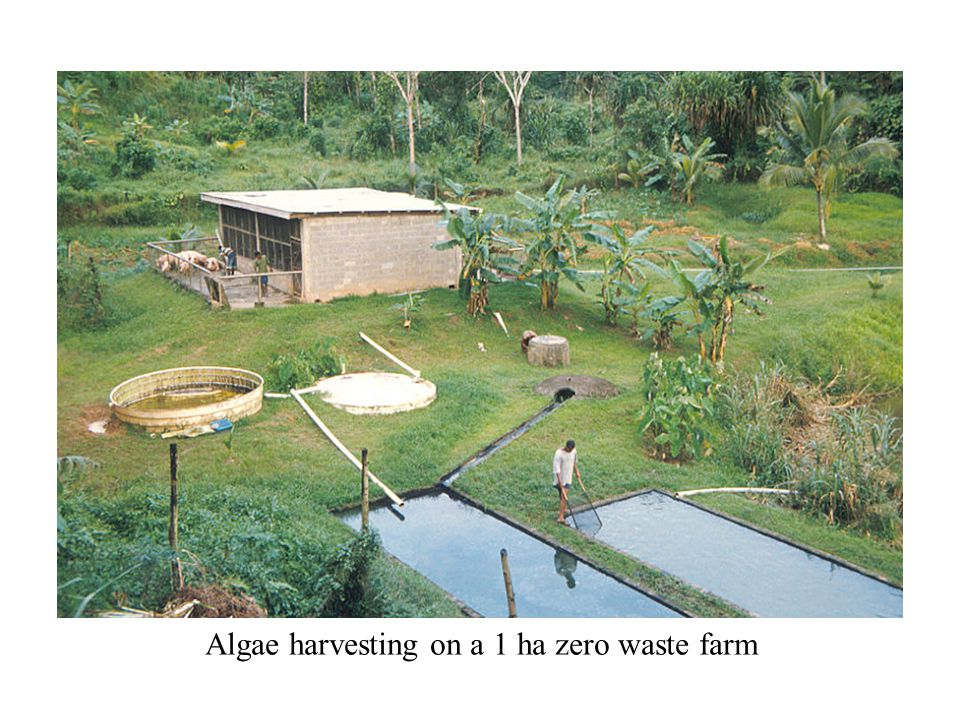 Algae harvesting on a 1 ha zero waste farm