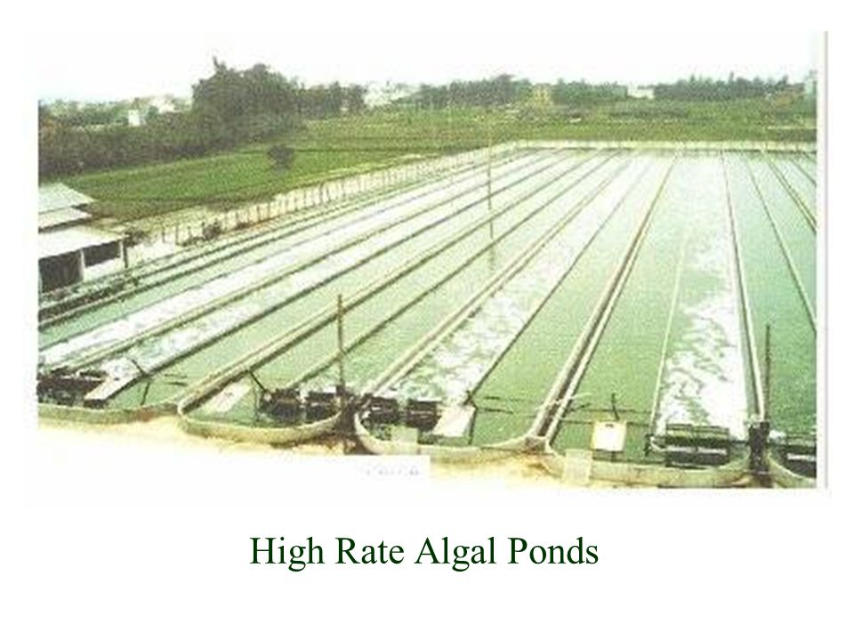 High Rate Algal Ponds