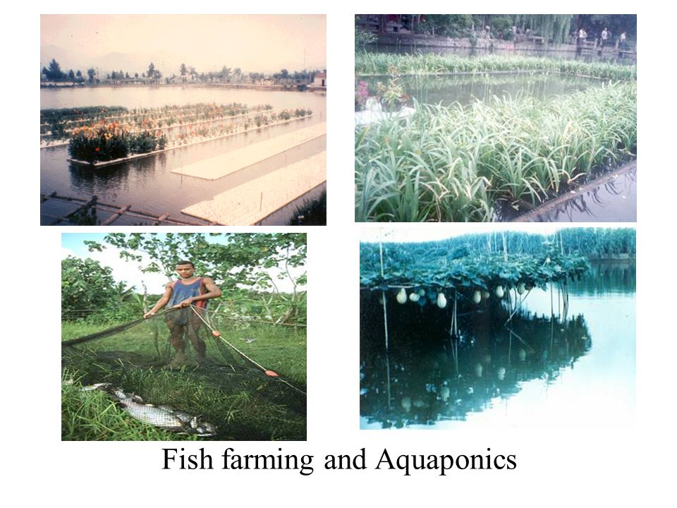 Fish farming and Aquaponics