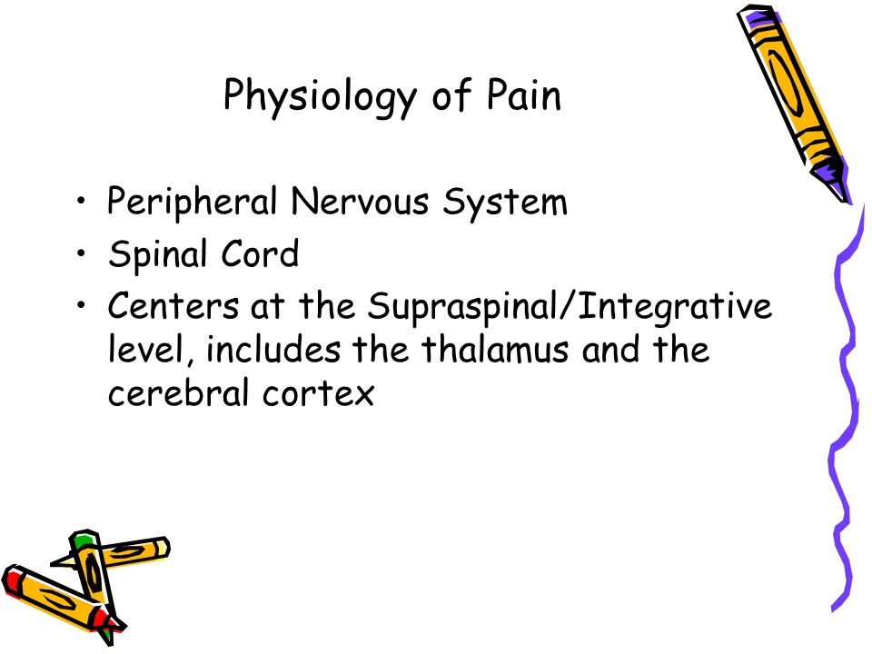 Physiology of Pain Peripheral Nervous System Spinal Cord Centers at the Supraspinal/Integrative level, includes the thalamus and the cerebral cortex