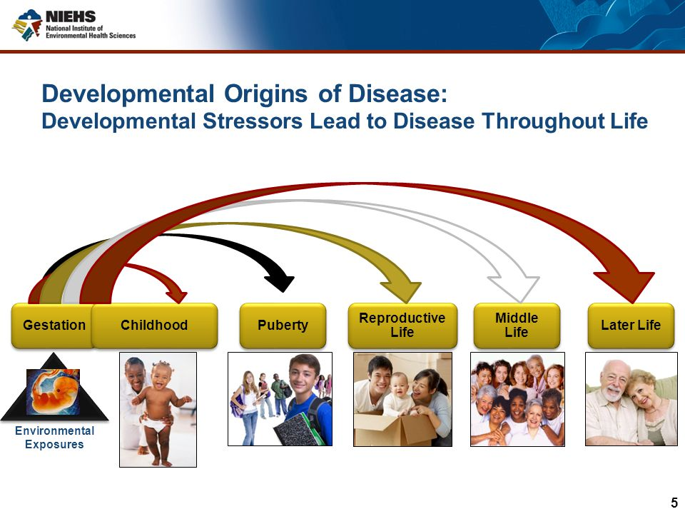 Developmental Exposures AGE 2 12 25 40 60 70 Learning differences/Behavior Asthma Increased Sensitivity to Infections Testicular Dysgenesis Syndrome Learning differences/Behavior Asthma Increased Sensitivity to Infections Testicular Dysgenesis Syndrome Obesity Altered Puberty Infertility Fibroids Premature Menopause Fibroids Premature Menopause Breast Cancer Atherosclerosis Cardiovascular Disease Atherosclerosis Cardiovascular Disease Prostate Cancer Alzheimer s Parkinson s Prostate Cancer Alzheimer s Parkinson s Diseases over the Lifespan from Developmental Exposures 6